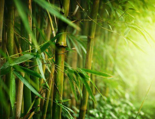 Bambusul este una dintre cele mai valoroase plante din lume